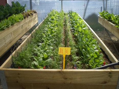 Mesas de cultivo el vergel de las hadas for Mesa de cultivo casera