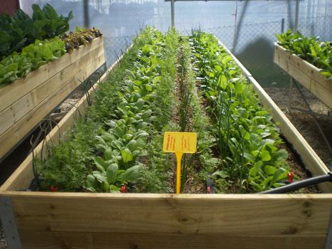 mesas-de-cultivo-web-1
