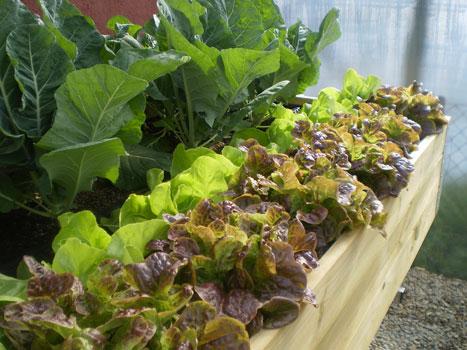 Huertos en casa santi soto blog for Mesa de cultivo casera