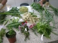 Taller de cocina con plantas silvestres 2 , en Manresa 24-5-10