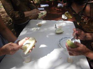 Obtención de semilla de pepino