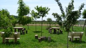 Foto horticultura plademunt 1