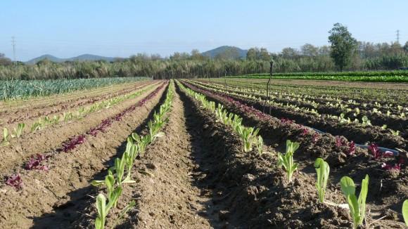 Foto horticultura plademunt 3