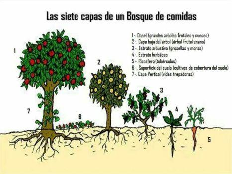 Dibujo-Esquema bosque comestible