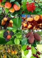 Foto de frutas 1