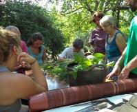 Reproducción de plantas aromáticas
